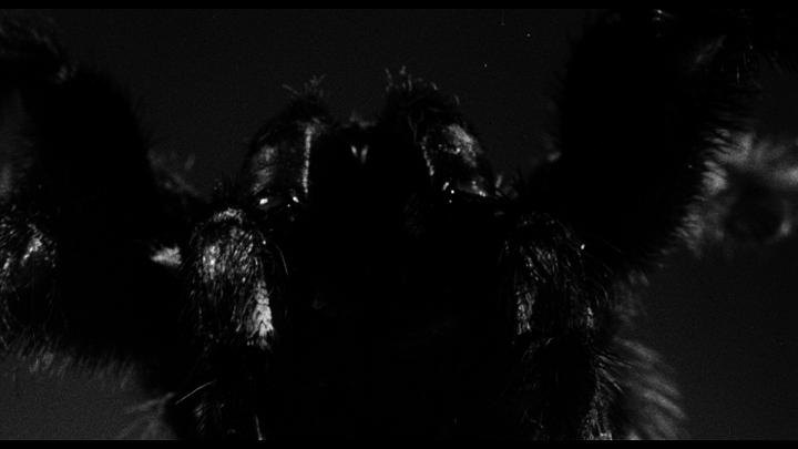 tarantula_5
