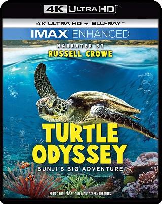 turtle_odyssey_4k